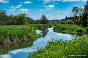 Salmon Creek Greenway Trail, Felida, Washington - The Salmon Creek